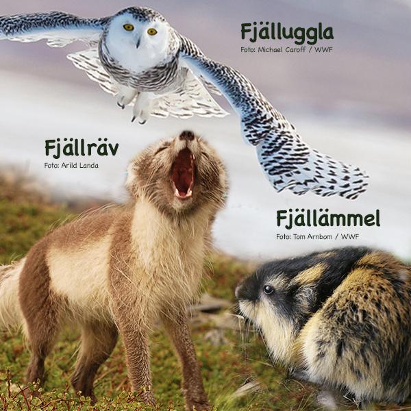 Vilket Fjälldjur är Du?