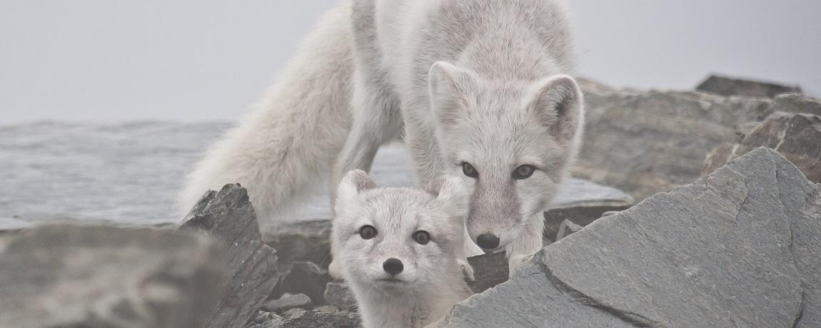 Naturligvis – Ny Podcast Om Natur, Miljø Og Forskning