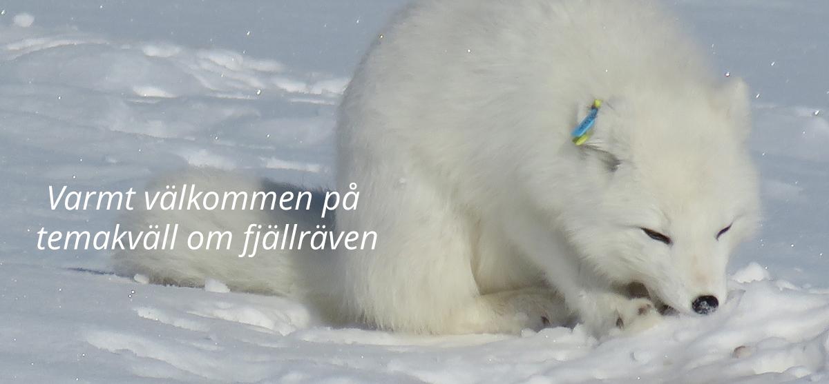 Foto: Sonja Almroth Länsstyrelsen Västerbottens län
